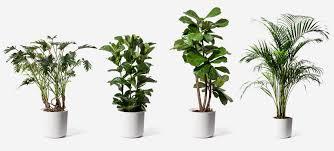 indoor plants images the plant shop plants flowerbx