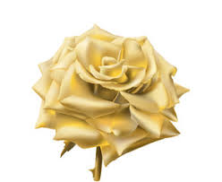 Gold Rose Search Photos By Aniko G Enderle