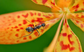 Hd Photography Wallpaper Ants Wallpaper Hd Android Apps On Google Play