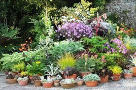 Landscape Design Online by Garden Design Garden Design With Single Container Vegetable