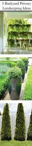 Backyard Privacy Landscaping Ideas by 94 Best Cper Landscaping Blog Compact Power Images On Pinterest