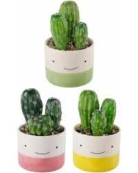 cactus home decor spectacular deal on flora bunda multi ceramic cactus faux succulent