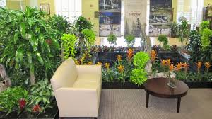 Home Interior Plants by Tropical Indoor Plants Ideas U2013 Home Design And Decor