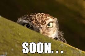 Funny Owl Meme - i can has cheezburger owls funny animals online cheezburger