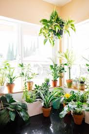2204 best plantas images on pinterest plants indoor plants and