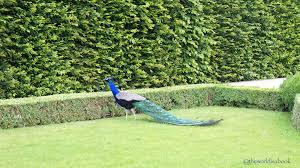 wandering through wallenstein palace garden prague the world is