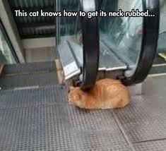 Cat Problems Meme - smart cat