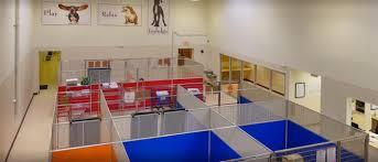 suite paws durham pet resort pet care pet boarding u0026 dog daycare