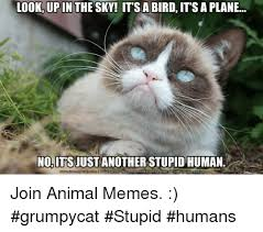 Stupid Animal Memes - look up in the sky it s a bird it s a plane no its just another