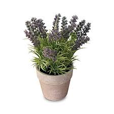indoor decor plants for living room amazon com