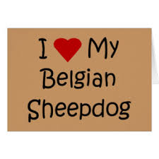 belgian sheepdog merchandise i love my belgian sheepdog greeting cards zazzle