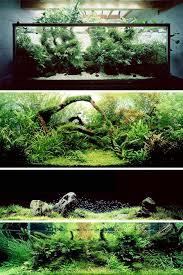 japanese aquascape aquariums by artist takashi amano who applies principles of