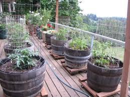 apartment patio vegetable garden treatment how to start a garden