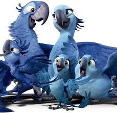 rio theater sweet home oregon jewel bird