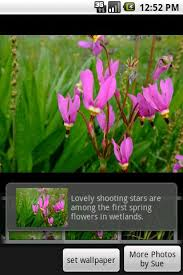 flower pro alaska s flowers pro android apps on play