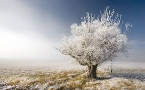 nature a frosty tree a frosty day in central otago new zealand