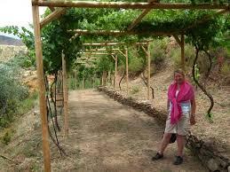 Grape Vine Pergola by Pergola Of Grape Vines Picture Of Botanical Park U0026 Gardens Of