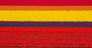 5184x2714px tulip fields hd pictures 76 1461245956
