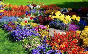 Flower Gardens Wallpapers - triyae com u003d backyard flower gardens pictures various design