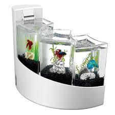 Beta Fish In Vase Office Desk Fish Tank Fluval Spec Aquarium T Whitehousevip Com
