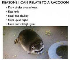 Raccoon Meme - i am raccoon album on imgur