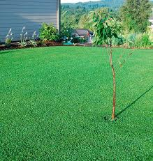 146 best micro clover images on pinterest clover lawn back