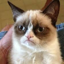Grump Cat Meme Generator - grumpy cat meme generator