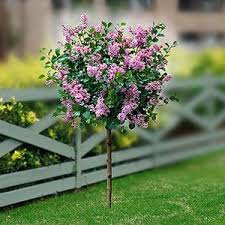 best 25 trees ideas on lilac