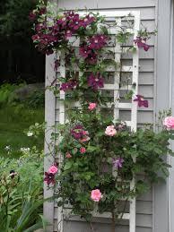 rose trellis clematis and rose trellis garden share ideas