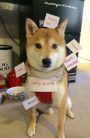 Best Of Doge Meme - best pet halloween costume of the year the meta picture