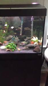 Fluval 125 Cabinet Fluval Roma 200 Aquarium And Cabinet Review Memsaheb Net