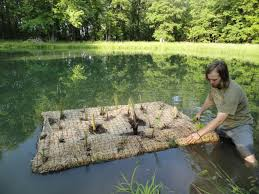 australian native water plants floating plant islands for ponds http fuelcincinnati org blog