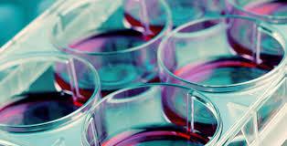 stem cells u2014 cellresearch corp