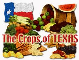 the crops of texas vegetable resources