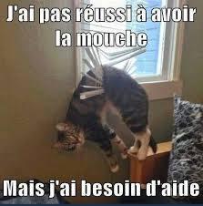 Plz Meme - help plz meme by fourchette memedroid