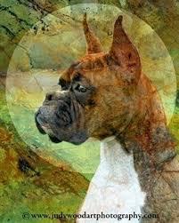 boxer dog art boxer dog art work allboxerinfo