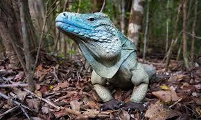 imágenes de iguanas verdes con rifles contrarrestaran plaga de iguanas verdes san luis en