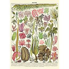 botanical wrapping paper cavallini wrapping paper paper source