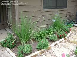 Easy Landscaping Ideas Backyard Easy Landscaping Ideas For Beginners Need Some Landscaping Help
