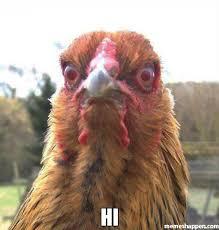 Hi Memes - hi meme rage chicken 35334 memeshappen