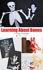 learning about bones activities for kids and free skeleton