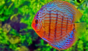ornamental fish featuring notably in 14 percent export growth