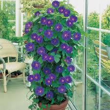 fleurs vivaces rustiques plante en pot créer un jardin avec des plantes en pot pratique fr