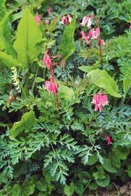 plante vivace soleil plantes vivaces couvre sol vivaces d u0027ombre plantes détente jardin