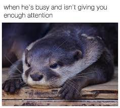 Sea Otter Meme - otter memes home facebook