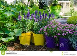 Beautiful Flowers Image Beautiful Flowers Pots Stand In The Garden Royalty Free Stock