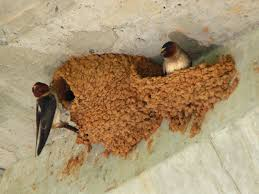 how to prevent swallows from building nest on your porch youtube