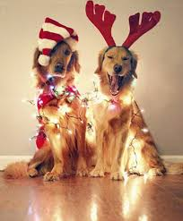 paw some 25 pictures of animals in christmas lights gurl com