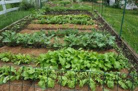 the backyard farming connection garden update