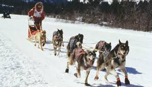 dog sledding tours in wyoming travel wyoming that u0027s wy